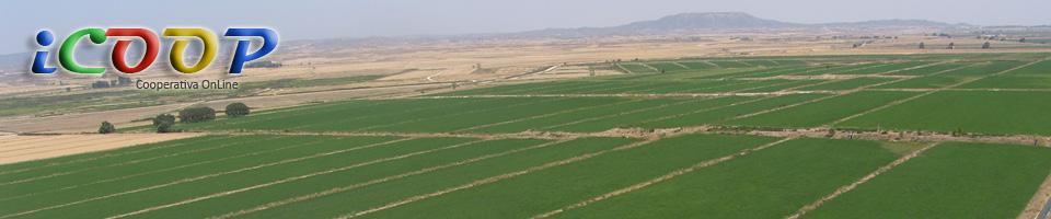 Cooperativa Agroalimentaria San Isidro Labrador